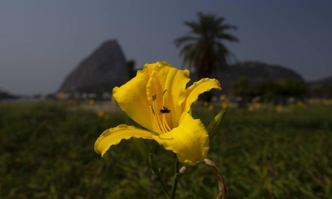 Abelha poliniza flor no Aterro do Flamengo Foto: Márcia Foletto / Agência O Globo