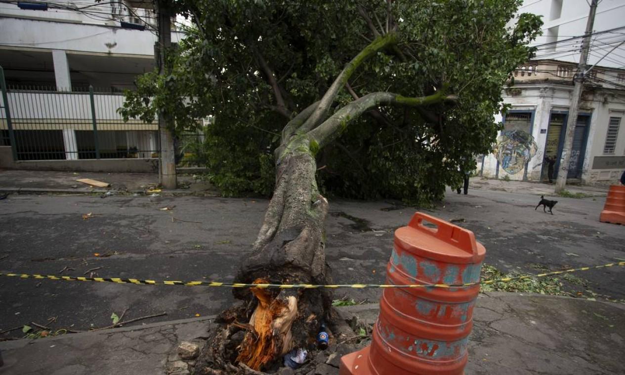 O Corpo de Bombeiros do Rio foi acionado, desde ontem, para 148 cortes de árvores no estado, dos quais 113 na capital Foto: Marcia Foletto / Agência O Globo