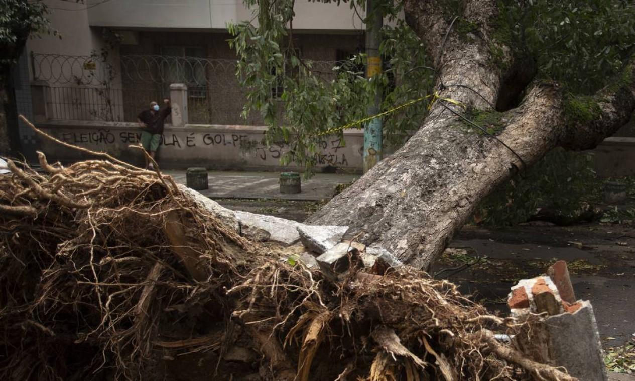 Árvore derrubada pelos ventos no bairro Maracanã, na Zona Norte, fica com as raízes expostas. Trânsito ficou bloqueado no local Foto: Marcia Foletto / Agência O Globo