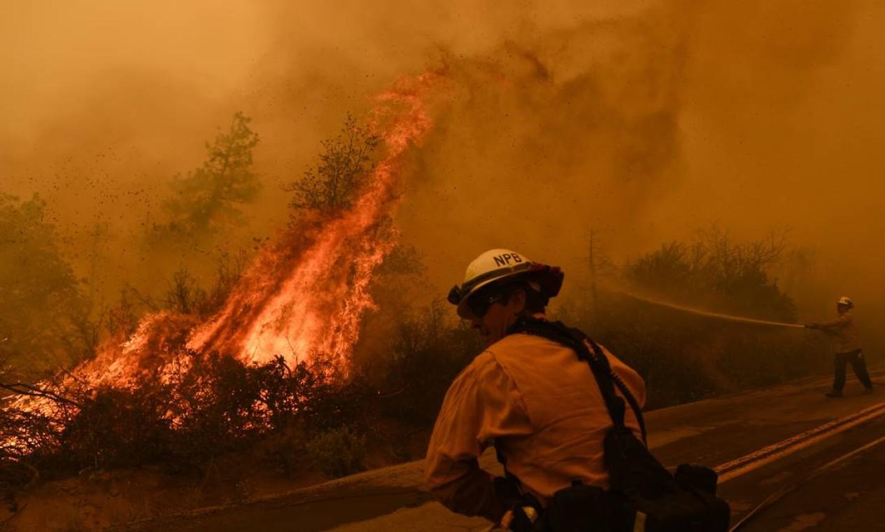 Bombeiros combatem chamas que avançam em direção a uma estrada na Floresta Nacional de Sequoia perto de Johnsondale, Califórnia, nos EUA Foto: PATRICK T. FALLON / AFP - 22/09/2021