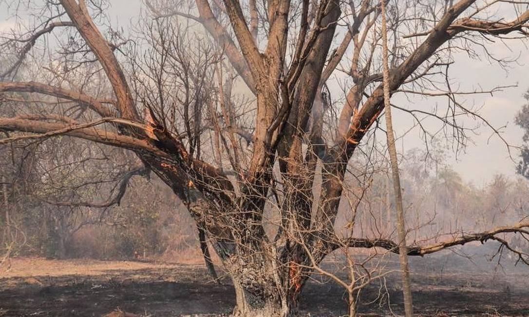 Os incêndios na região da Baixada Cuiabana, que compreende os municípios que formam as nascentes do Pantanal. Fumaça e vegetação destruída tomaram a paisagem em muitos dos onze municípios da baixada. Foto: Guilherme Silva