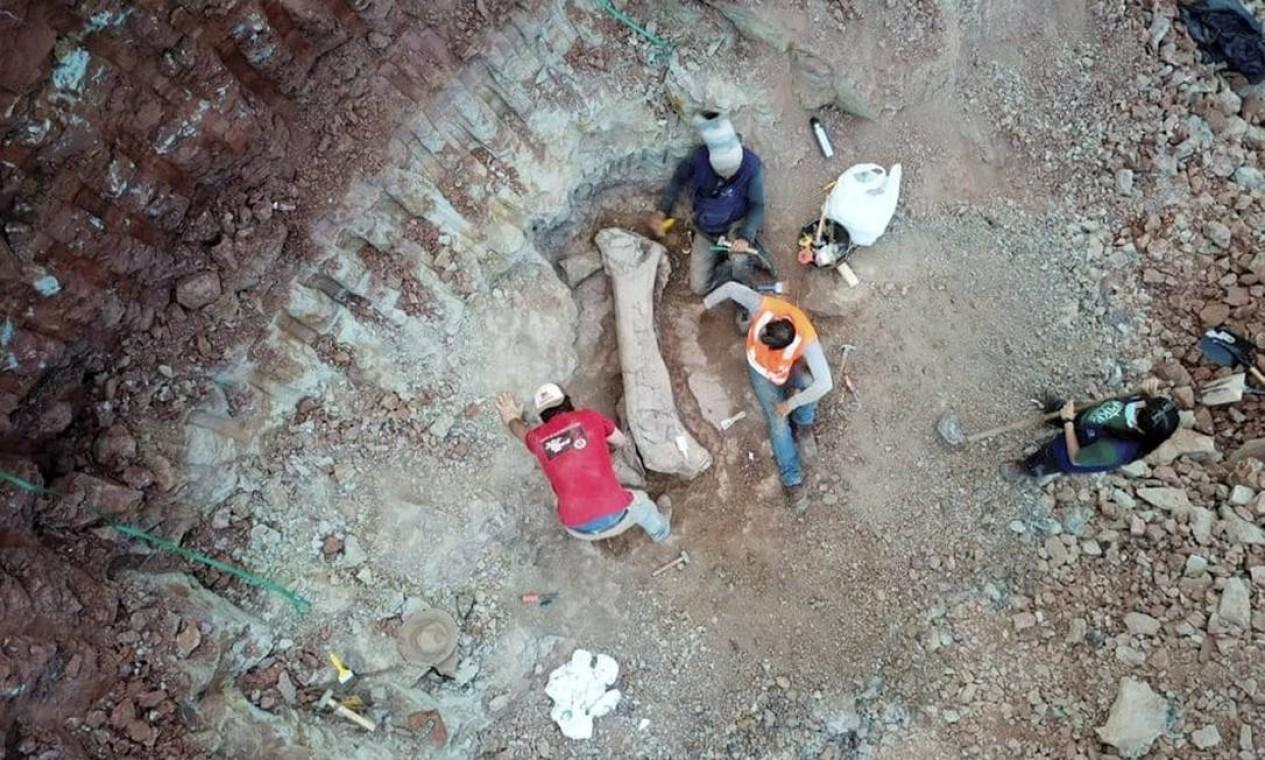 Fóssil de dinossauro foi encontrado em Davinópolis, no Sudoeste do Maranhão Foto: Divulgação / Brado