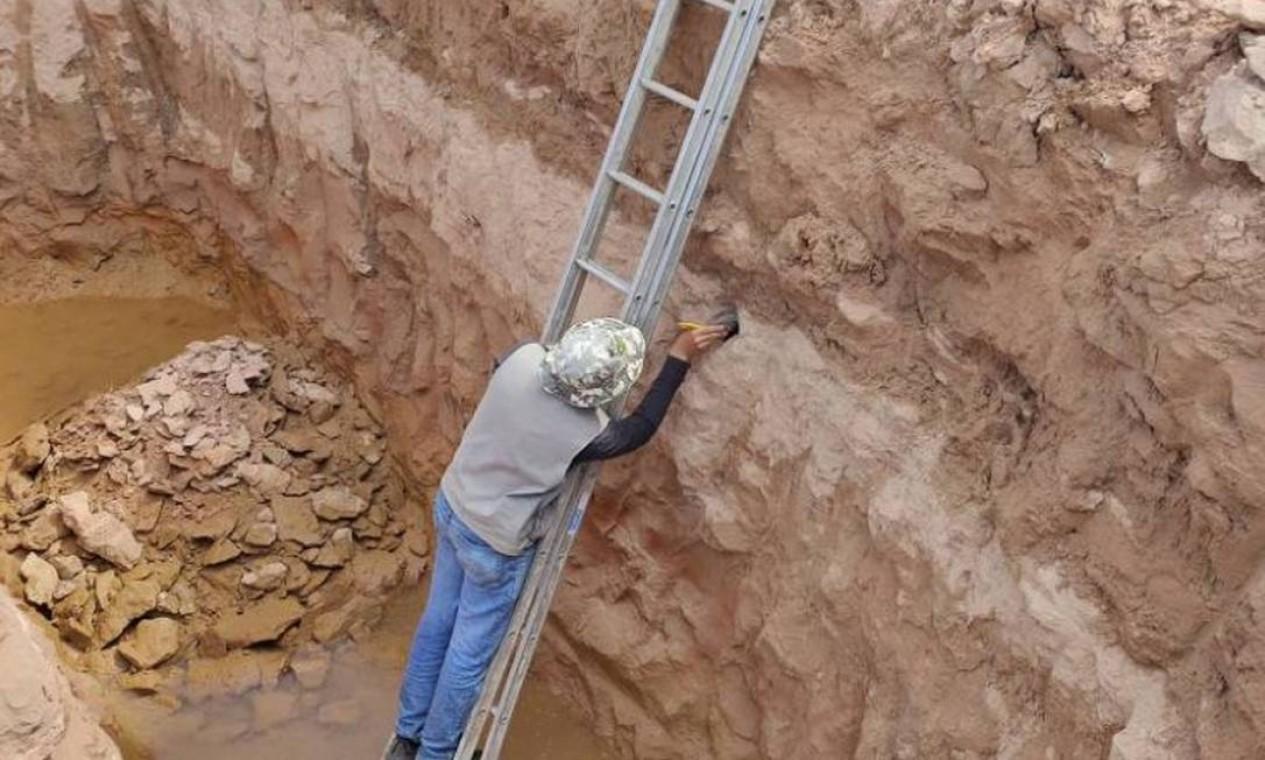 Tamanho estimado da possível espécie encontrada em Davinópolis é de 18 metros de comprimento Foto: Divulgação / Divulgação / Brado