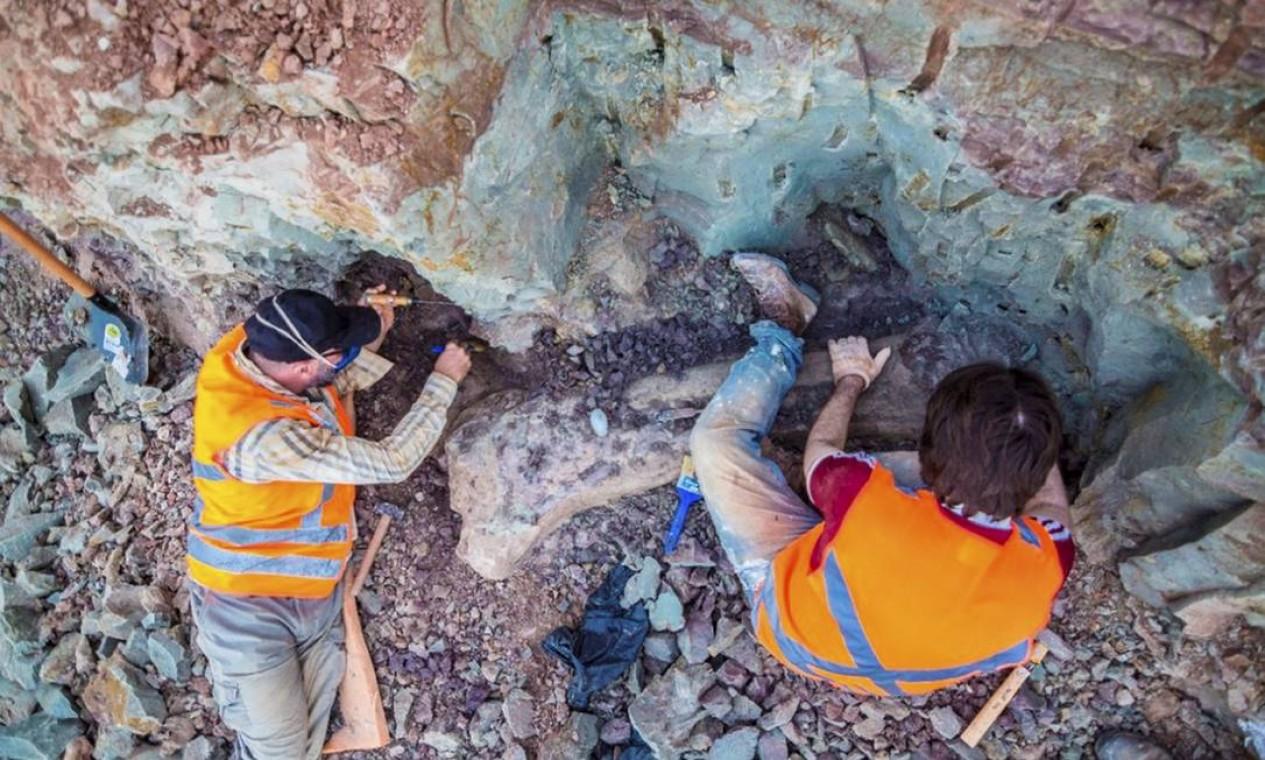 Fêmur de mais de 1,5 metro, pés e mãos, costelas, além de vértebras do animal foram encontrados na região Foto: Divulgação / Brado
