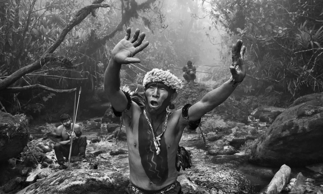 Floresta Amazônica Foto: Sebastião SALGADO / Divulgação