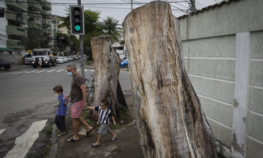 Cotocos de caules na esquina das ruas Ituverava e Bananal, na Freguesia, em Jacarepaguá. A denúncia foi feita em março, quando começaram a matar as plantas Foto: Marcia Foletto / Agência O Globo