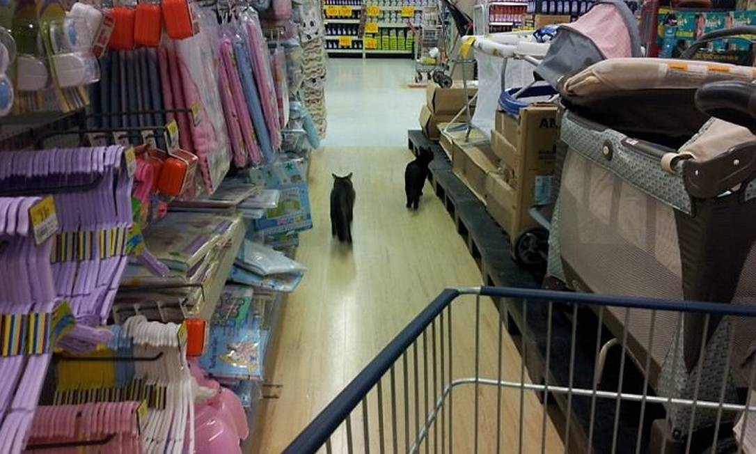 Eu-repórter: gatos circulam por supermercado Walmart da Barra da Tijuca. Foto de leitor