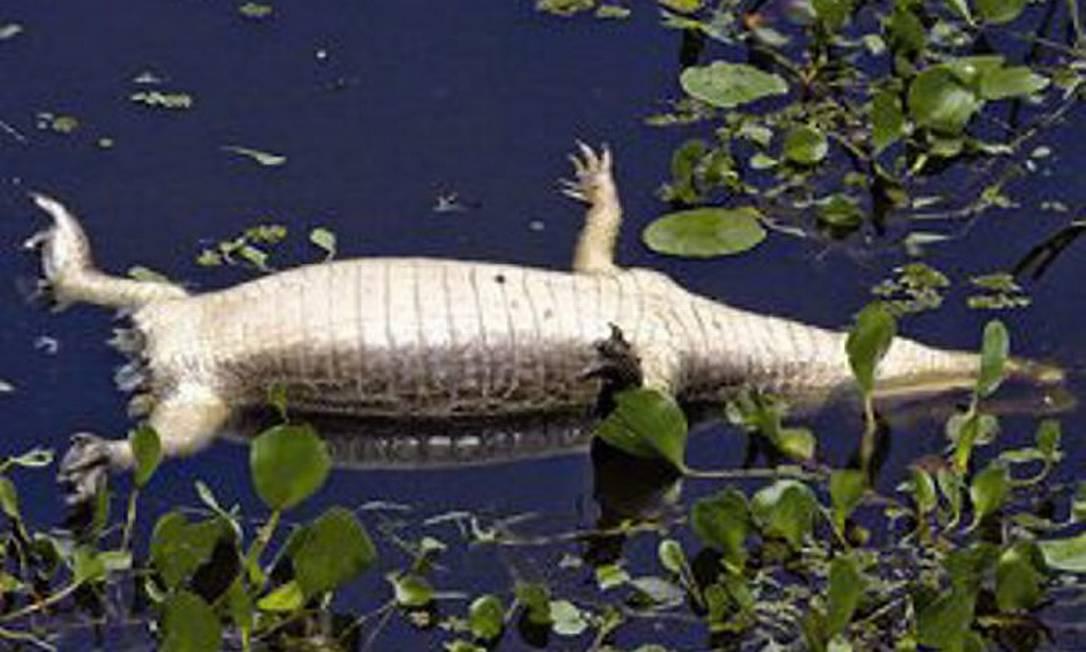 Reprodução de imagem Globo.comGlobo Natureza