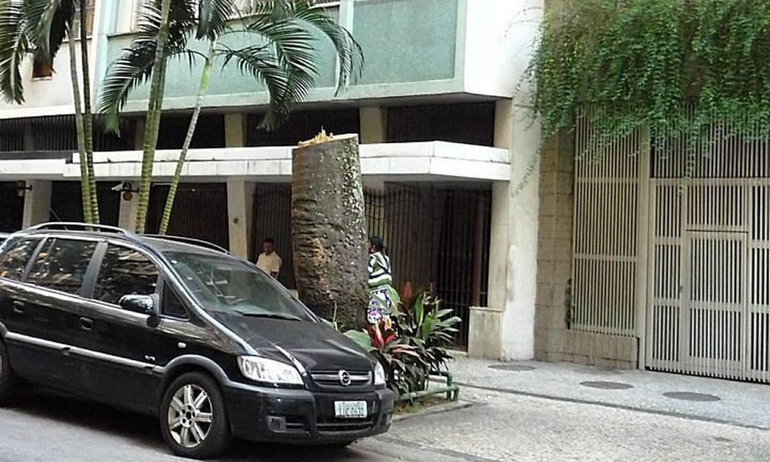 Eu-repórter: palmeiras centenárias da Rua Paissandu, no Flamengo, são ameaçadas por cupins. Foto da leitora Denise Weller