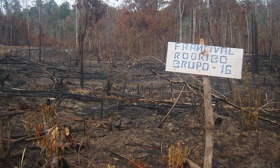 Floresta derrubada por invasores, que fizeram queimadas e extraíram madeira Foto: Evandro Corrêa
