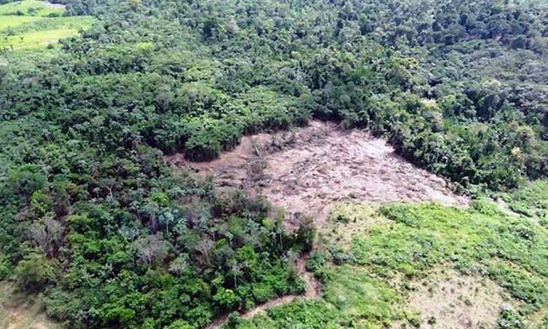 Uma das áreas devastadas identificadas pelo Ibama - Foto de divulgação