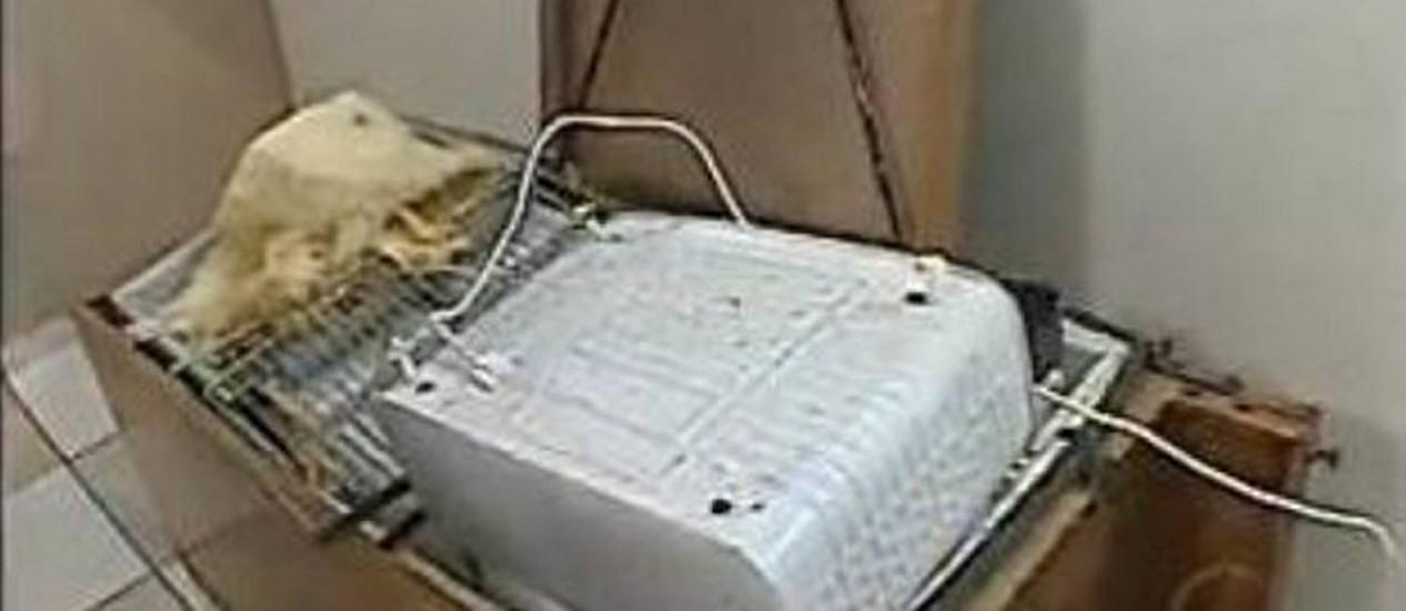 Celulares estavam dentro de geladeira - ReproduçãoTV Paraná