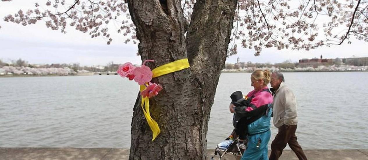 Em Washington, nos EUA, visitantes passam por cerejeira florida com mensagem para japoneses - AP