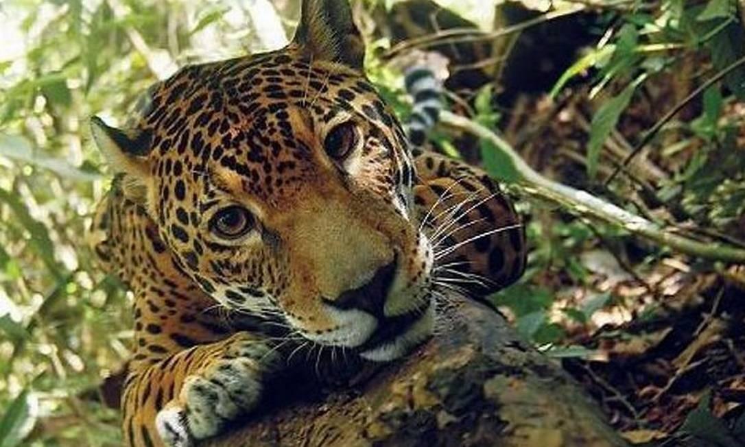 Reprodução Globo Amazonia