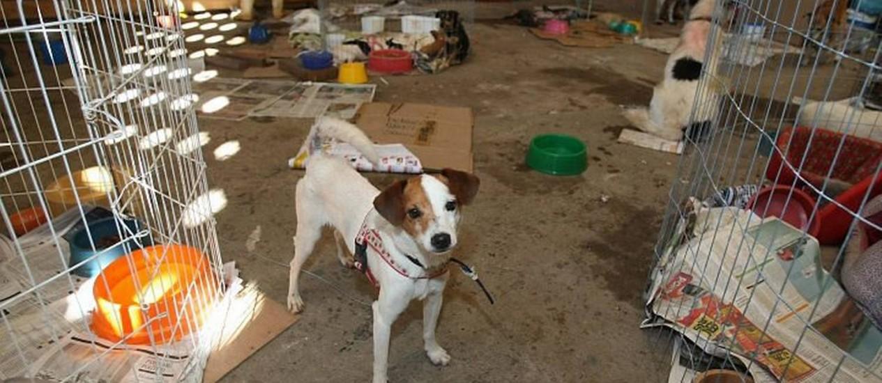 Abrigo em Teresópolis para cachorros que foram abandonados ou que perderam os donos vítimas das chuvas na Região Serrana Foto: Márcio Alves - O Globo