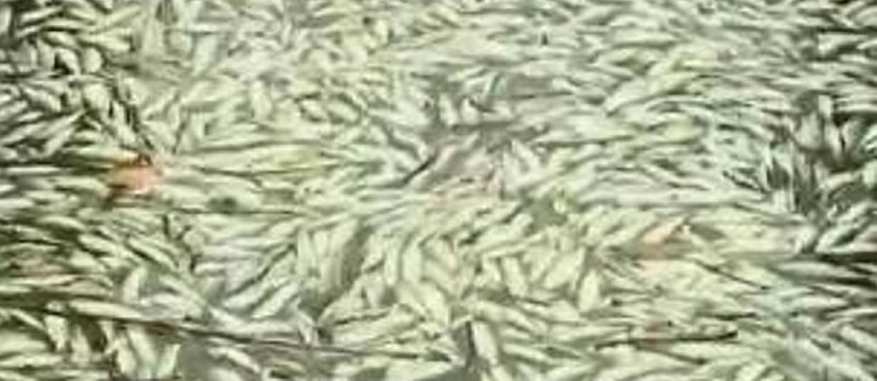 Mortandade de peixes ainda é um mistério no litoral do Paraná - Reprodução TV Globo