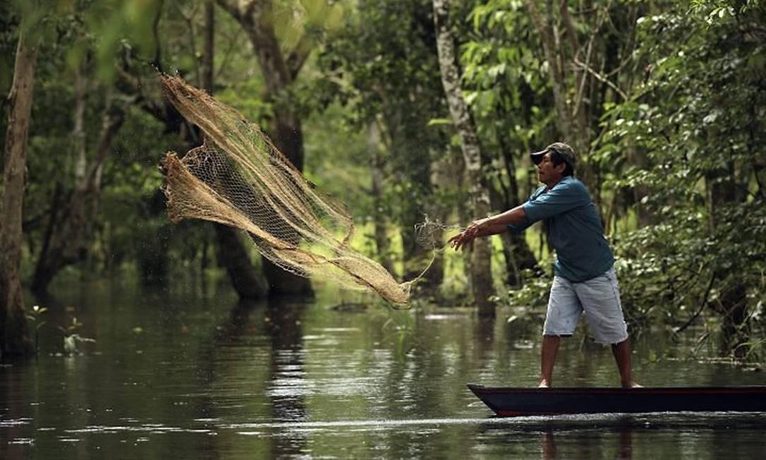 Novo Código Florestal ameaça abandonadar áreas úmidas e florestas alagadas do Brasil. Foto: Latinstock