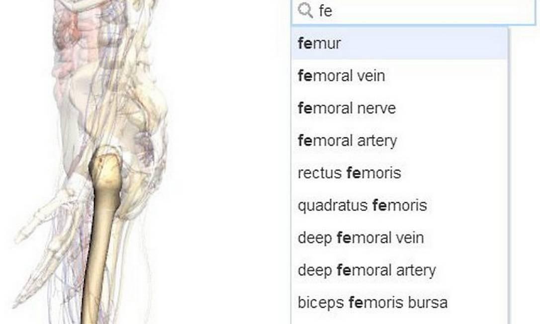 Google cria ferramenta de anatomia online que mostra imagens