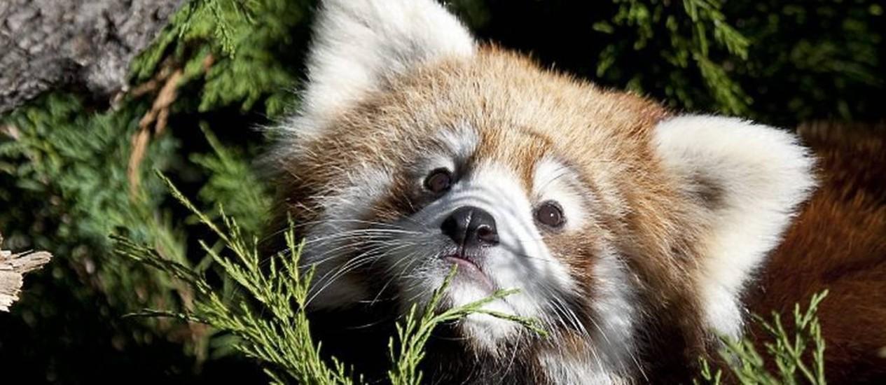 Amado Pandas, pássaros e filhotes de tigre estão entre os bichos mais  EJ59