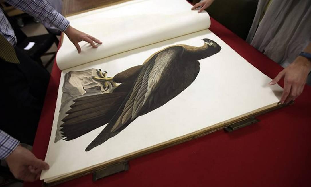 Resultado de imagem para As Aves da América - James Audubon 1 ediçao