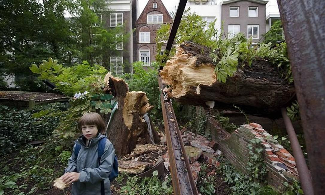 Castanheira gigante que confortou a menina holandesa Anne Frank, quando se escondia com a família dos nazistas em um sótão em Amsterdã, caiu por causa dos fortes ventos e chuva Reuters