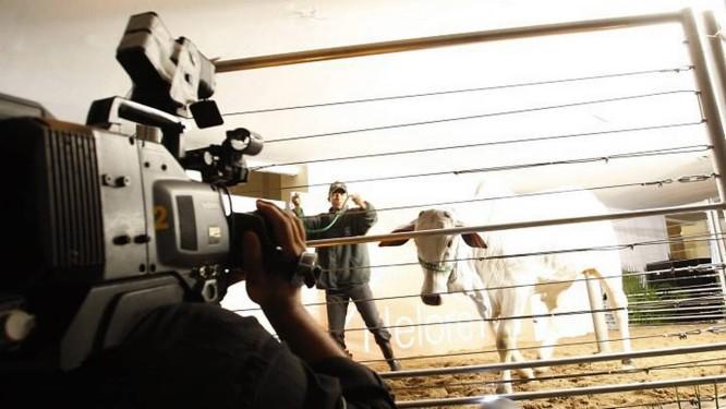 Leilão realizado no Jockey Club é transmitido pelo Canal Rural. Foto: Simone Marinho