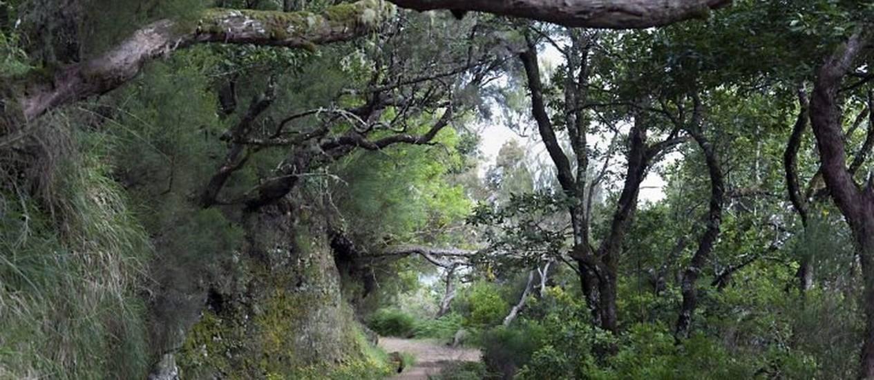 Trilhas cortam o verde seguindo o trajeto dos córregos e são perfeitas para agradáveis caminhadas em mata milenar Foto: Andrew Testa The New York Times