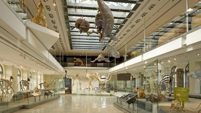 Interior do Museu de História Natural de Los Angeles Foto: Tom BonnerDivulgação