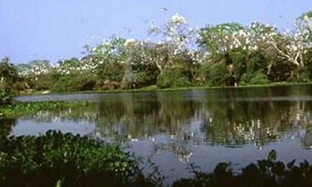 Segundo levantamento, a pecuária é o principal vetor do desmatamento no PantanalFoto Divulgação