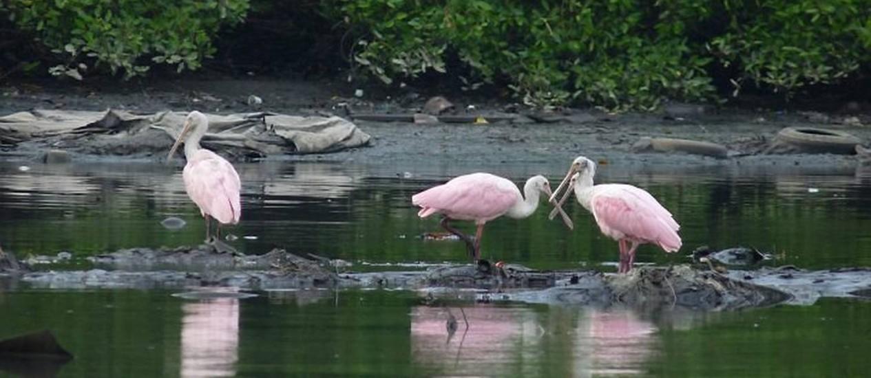 COLHEREIROS PASSEIAM pelo Canal do Fundão Foto de Alfredo Heleno