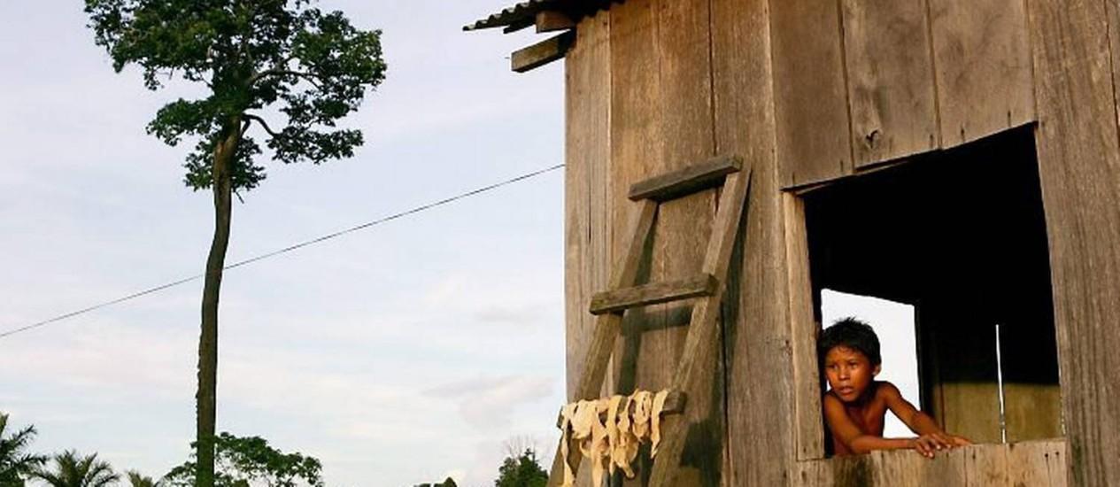 A castanheira solitária em Humaitá, no Amazonas: paisagem da desolação