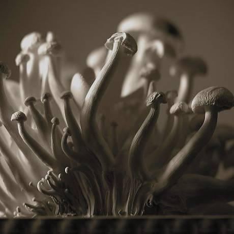 Cogumelos Shimeji. Crédito: MonsoonLatinstock