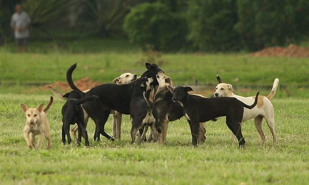 Cachorros ficam soltos em campus de universidade Foto: Gabriel de Paiva/31-3-2010
