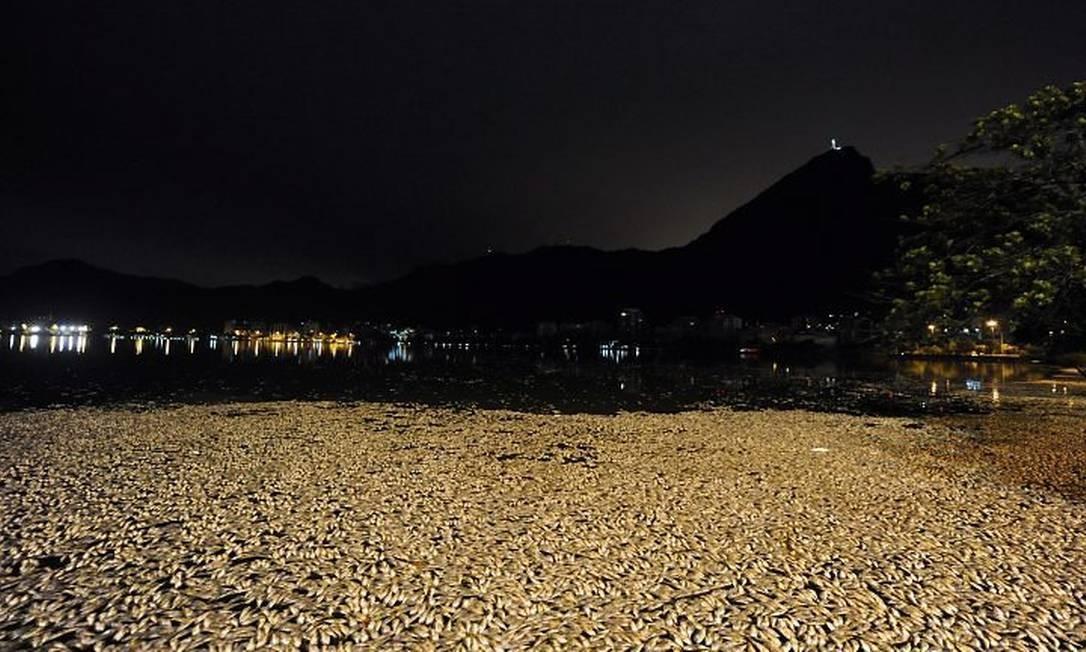 Milhares de peixes apareceram mortos na madrugada de sábado. Foto: Ana Branco