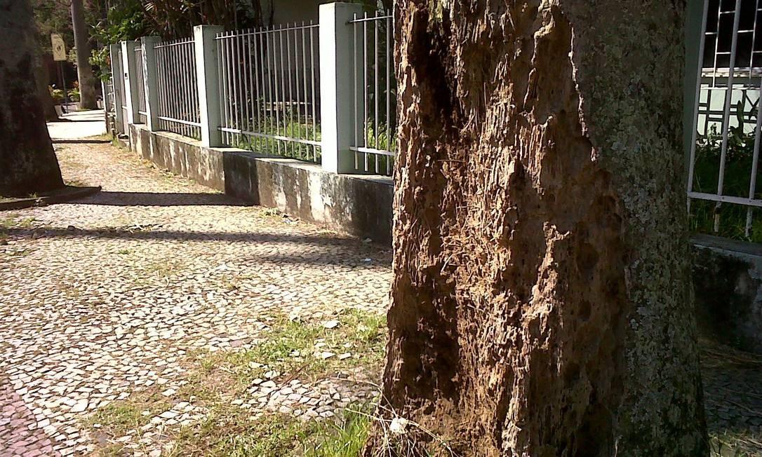 Repletas de cupins, árvores na Ilha do Governador ainda não têm tratamento previsto pela Comlurb Foto do leitor Leonardo Ferreira / Eu-Repórter