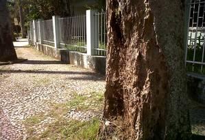 Repletas de cupins, árvores na Ilha do Governador ainda não têm tratamento previsto pela Comlurb Foto: Foto do leitor Leonardo Ferreira / Eu-Repórter