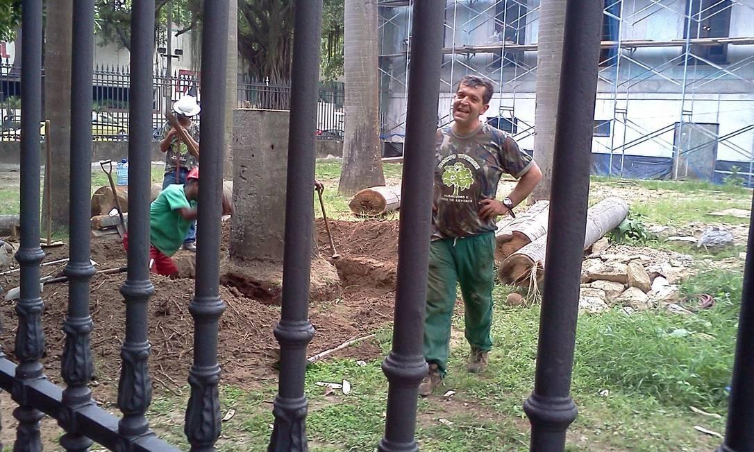 Sem manutenção, as árvores foram sacrificadas Foto do leitor Ricardo Quintela / Eu-Repórter
