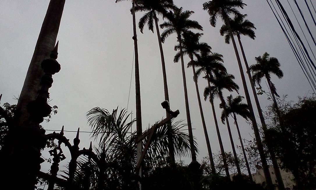 As palmeiras estavam no terreno que receberá a sede da futura Casa Daros, na Rua General Severiano Foto do leitor Ricardo Quintela / Eu-Repórter