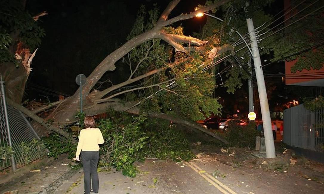 Ventania causa transtornos no Leblon. Nem sempre a convivência das árvores com a cidade é boa. Foto de Carlos Ivan862011