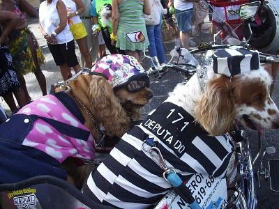CACHORROS FANTASIADOS no carnaval do ano passado Foto: Divulgação/18-02-2011