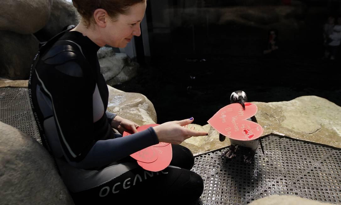 Bióloga entrega cartão escrito por visitantes a Howard, um pinguim africano da Academia de Ciências da Califórnia, em São Francisco AP