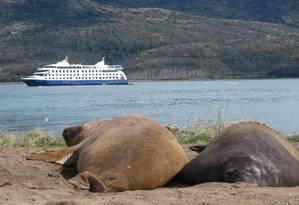 Elefantes-marinhos no Parque Alberto de Agostini, no Chile, com o navio Stella Australis ao fundo Foto: Eduardo Maia / O Globo