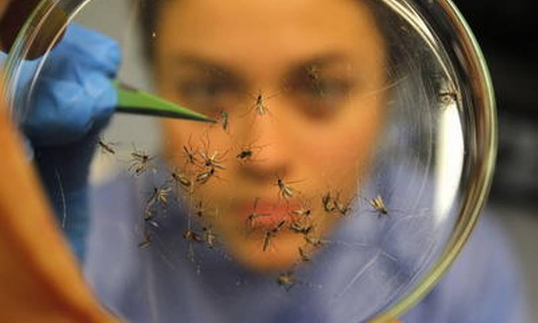 Pesquisadores criaram o primeiro modelo eficaz para diferenciar a dengue de sua forma mais severa, a forma hemorrágica, e prever quem poderá desenvolvê-la Foto: Custodio Coimbra