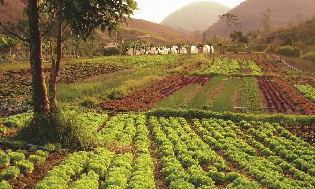 Plantação de orgânicos do Sítio do Moinho, em Itaipava Foto: Divulgação / Sítio do Moinho