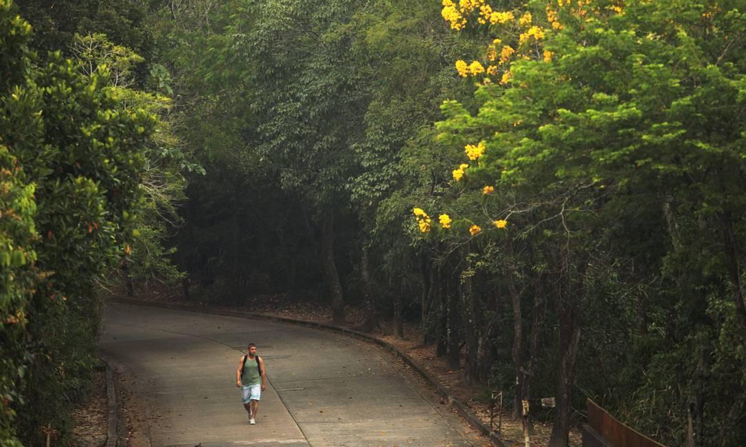 Homem caminha na Estrada das Paineiras, na Floresta da Tijuca. Foto de 28/02/2012 Foto: Gabriel de Paiva / O Globo
