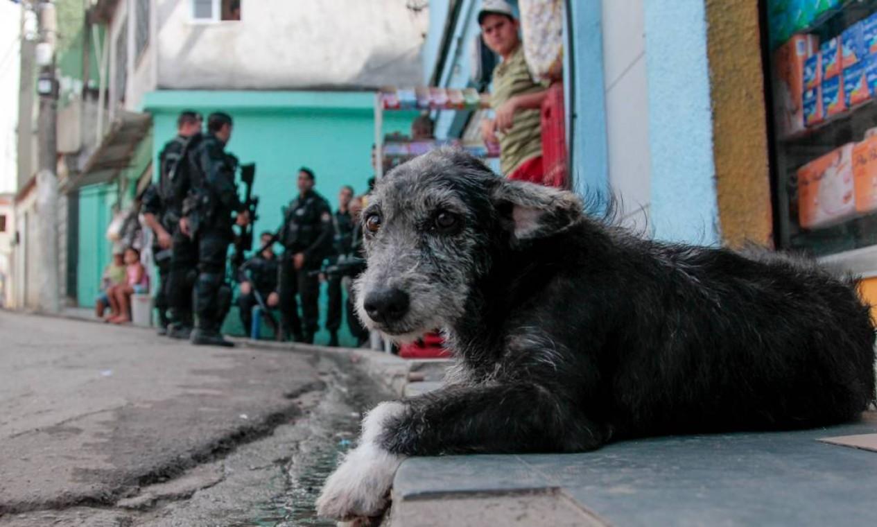 Enquanto policiais do Bope ocupam o Complexo do Alemão, um cão observa a movimentação na área Foto: Pedro Kirilos / O Globo