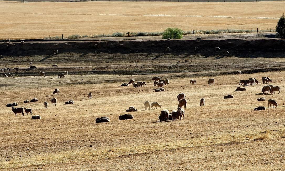 'Grande Seca' chega ao fim na Austrália após um década Foto: AFP