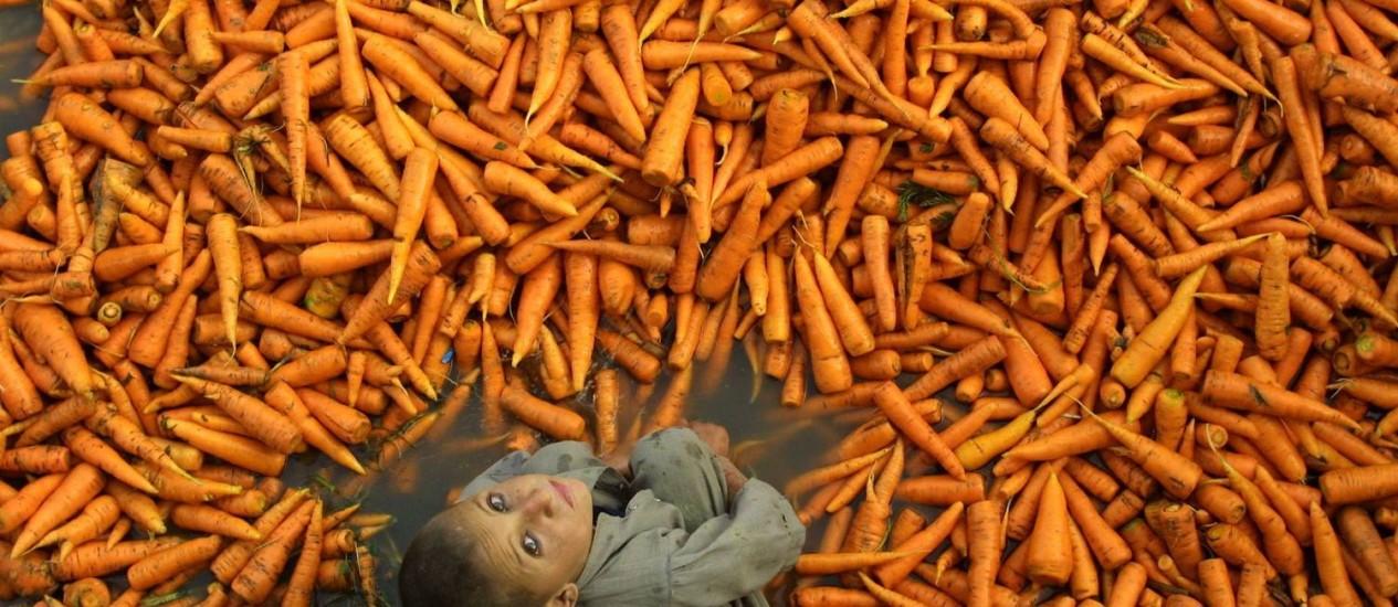 O menino afegão Mahmmad Naim cercado de cenouras em uma feira de Cabul: células da planta foram modificadas por cientistas para fabricar enzima humana Foto: AP/Sergei Grits