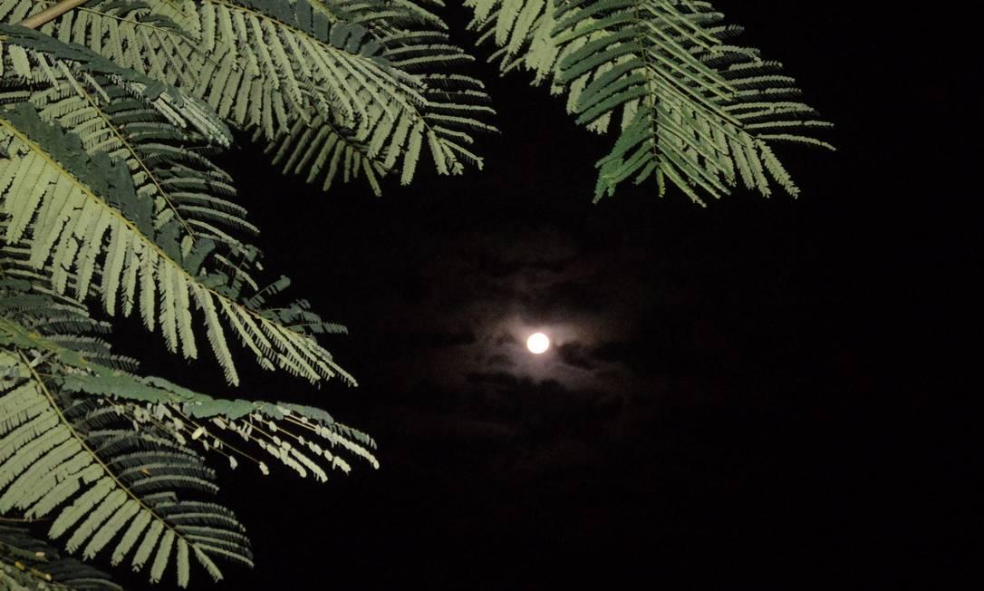 Emoldurada pelas folhas, a lua surge em Niterói Foto da leitora Vivian Rodrigues, pelo Facebook / Eu-Repórter