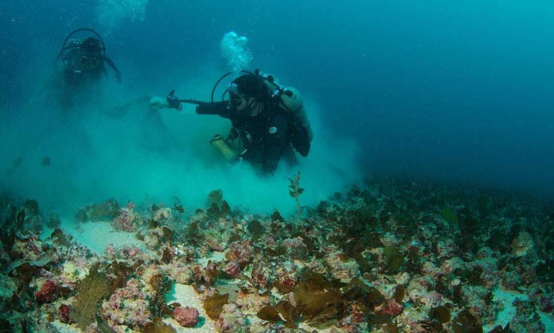 Mergulhadores da Rede Abrolhos fazem pesquisa de campo no assoalho marinho da plataforma continental, repleto de algas calcárias, os rodolitos, que se espalham por 20 quilômetros quadrados da região Foto: Rodrigo de Moura/CI-Brasil
